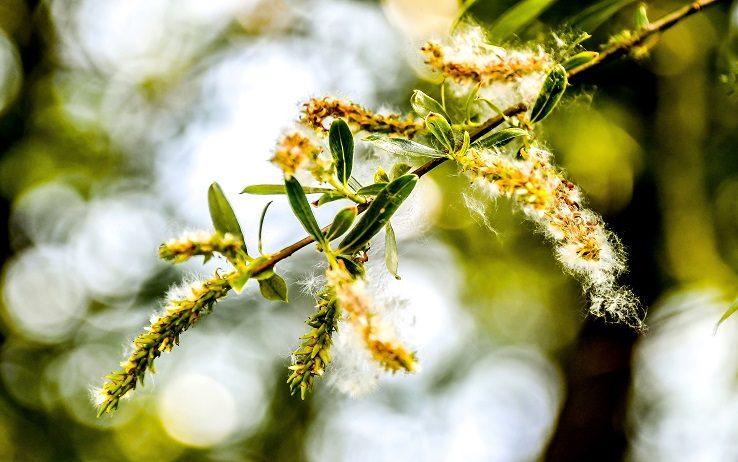 Gli insetti impollinavano i fiori già...