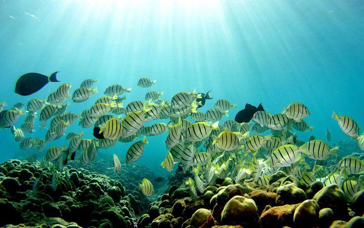 Acidificazione oceani, smentiti effet...