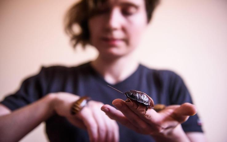 Ritrovato nell'ambra uno scarafaggio ...