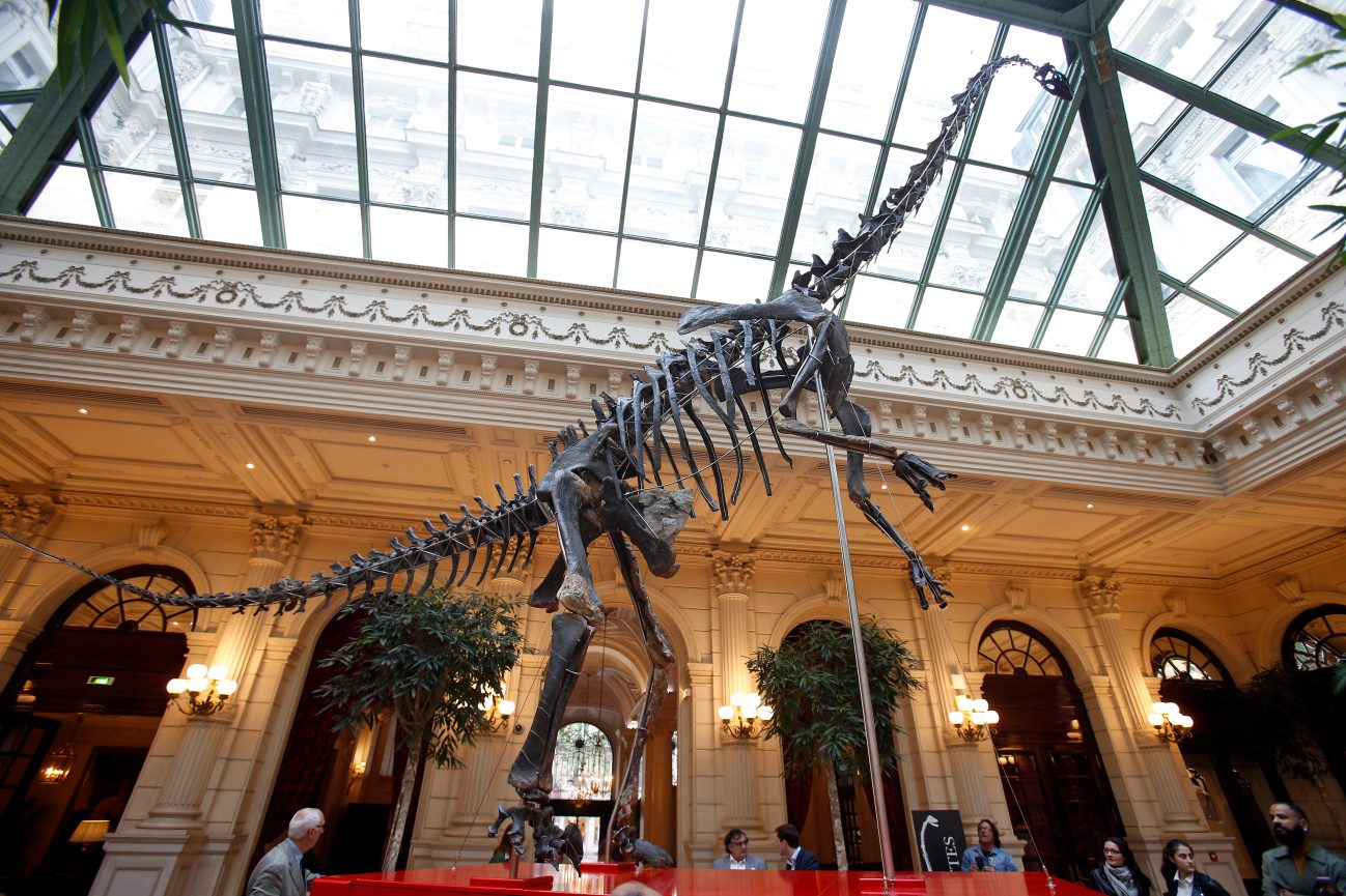 PARIS, FRANCE - JUNE 06: The Skeleton of a close relative of the Diplodocus (157,3 to 152,1 million years old), surnamed Skinny is displayed in the lobby of the Intercontinental Paris Le Grand hotel prior to be sold on auction by Aguttes on June 6, 2019 in Paris, France. This skeleton, 12,95 meters long and 6,20 meters high, discovered in the state of Wyoming, in the western United States will be sold on June 13 by the auction house Aguttes, it is estimated between 1.2 and 1.8 million euros. (Photo by Chesnot/Getty Images)