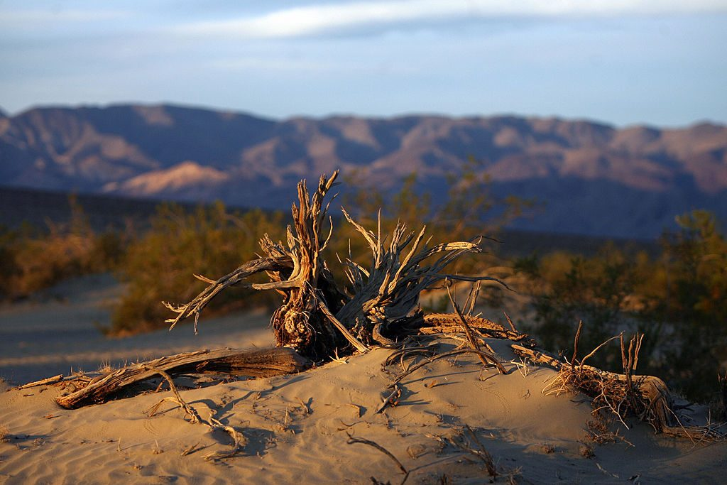 """Death Valley, UNITED STATES: Sand dunes near the village of Stovepipe Wells is pictured 19 November 2006. Death Valley, the largest national park in the US, comprises more than 3.3 million acres of desert wilderness. Anthropologists estimate that roaming humans first settled in Death Valley roughly 10,000 years ago. Some 2,000 years ago, native peoples lived along the edge of a 30-foot-deep-lake. In 1849, a group of gold rush pionneers entered the Valley, thinking it was a shortcut to California. After barely surviving the trek across the aera they named the spot """"Death Valley"""". In the 1880's native peoples were pushed out by mining companies who sought the riches of gold, silver, and borax. AFP PHOTO/GABRIEL BOUYS (Photo credit should read GABRIEL BOUYS/AFP via Getty Images)"""